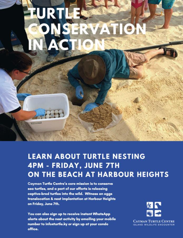 turtle nest implantation flyer Harbour Heights
